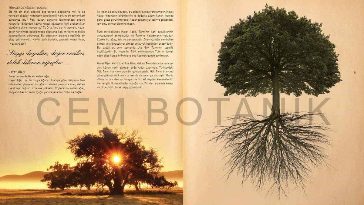 Ağaç mitolojileri