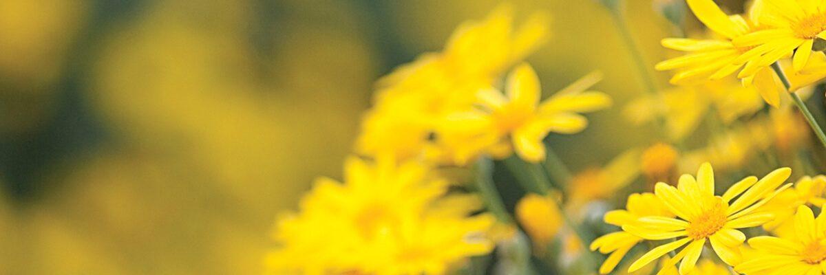 Bahçenize Renk Katacak Kokulu Çiçeklerin Bakımı