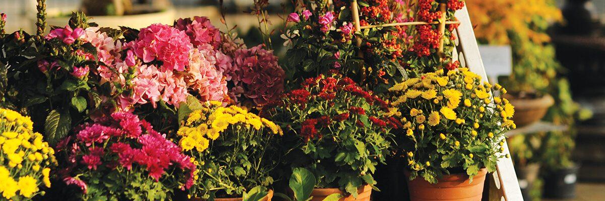 Sonbahar bahçe bakımı