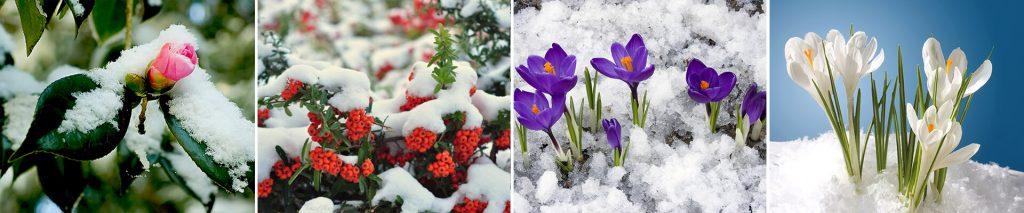 cem botanik blog soguk havaya dayanıklı bitkiler